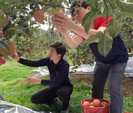 한약재거름으로 키운 사과를 따러 다녀왔습니다.[대전 유앤그린여성한의원]