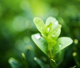 항암화학요법으로 저하된 난소기능을 회복시키는데 한약이 큰 도움이 됩니다.